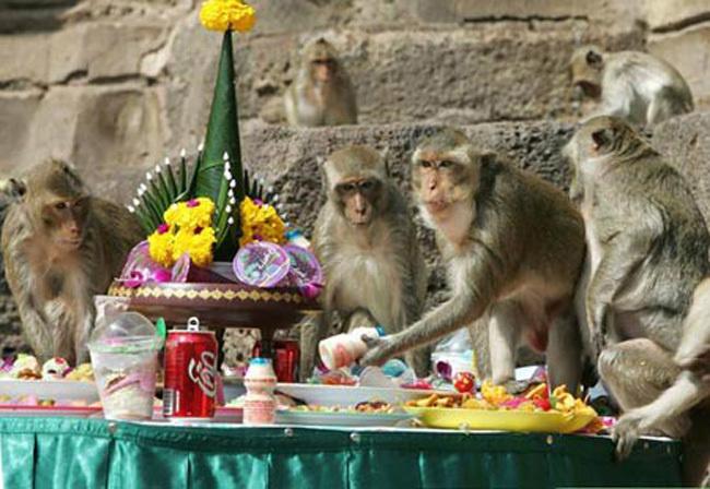 Monkey Buffet